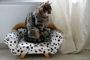 котка на стол